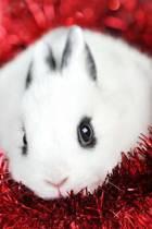 Mindblowing Cute White Rabbit Journal