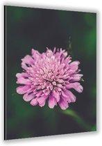 Dibond –Roze Bloem– 40x60cm Foto op Dibond;Aluminium (Wanddecoratie van metaal)