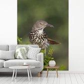Fotobehang vinyl - Rosse spotlijster neergestreken op een struik breedte 220 cm x hoogte 300 cm - Foto print op behang (in 7 formaten beschikbaar)