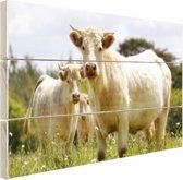Witte koeien in het veld Hout 160x120 cm - Foto print op Hout (Wanddecoratie) XXL / Groot formaat!