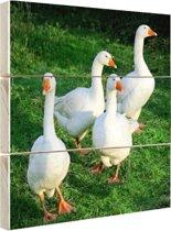 FotoCadeau.nl - Vier witte ganzen Hout 30x20 cm - Foto print op Hout (Wanddecoratie)