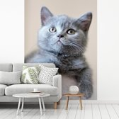 Fotobehang vinyl - Portret van een korthaar breedte 235 cm x hoogte 320 cm - Foto print op behang (in 7 formaten beschikbaar)