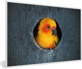 Foto in lijst - Een Zonparkiet zit in een nest in een boom fotolijst wit 60x40 cm - Poster in lijst (Wanddecoratie woonkamer / slaapkamer)
