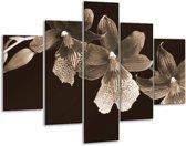 Glasschilderij Bloem | Sepia, Bruin | 100x70cm 5Luik | Foto print op Glas |  F001881