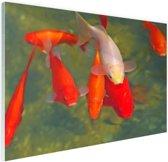 School met grote vissen Glas 180x120 cm - Foto print op Glas (Plexiglas wanddecoratie) XXL / Groot formaat!