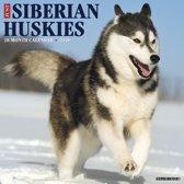 Siberian Husky Kalender 2020