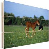 Veulen in een klein weiland Vurenhout met planken 30x20 cm - klein - Foto print op Hout (Wanddecoratie)