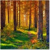 Canvas Schilderij Bomen Bos