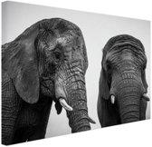 Nieuwsgierige olifanten zwart-wit Canvas 30x20 cm - Foto print op Canvas schilderij (Wanddecoratie)
