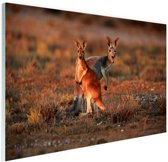 Kangoeroes zonsopgang Glas 90x60 cm - Foto print op Glas (Plexiglas wanddecoratie)