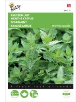 Kruizemunt - Mentha spicata