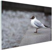FotoCadeau.nl - Meeuw Glas 120x80 cm - Foto print op Glas (Plexiglas wanddecoratie)