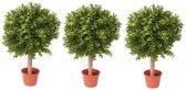 3x Buxus bol kunstplant op stam in pot 35 cm - Kunstplanten/nepplanten
