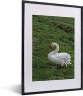 Foto in lijst - Een witte trompetzwaan in het gras fotolijst zwart met witte passe-partout klein 30x40 cm - Poster in lijst (Wanddecoratie woonkamer / slaapkamer)