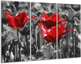 Glasschilderij Tulpen | Rood, Grijs | 120x80cm 3Luik | Foto print op Glas |  F002808