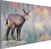 Geit op een rots  Aluminium 120x80 cm - Foto print op Aluminium (metaal wanddecoratie)