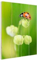Lente lieveheersbeestje Hout 20x30 cm - klein - Foto print op Hout (Wanddecoratie)
