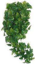 Komodo Plant Split Philodendron - 40 cm