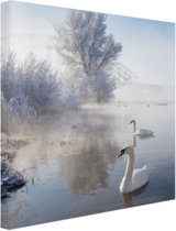Zwanen in de winter Canvas 50x50 cm - Foto print op Canvas schilderij (Wanddecoratie woonkamer / slaapkamer) / Dieren Canvas Schilderijen