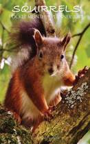 Squirrels Pocket Monthly Planner 2017