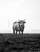 Koe zwart-wit Poster - 30x40cm – WALLLL