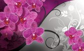 Fotobehang Bloemen, Orchidee | Roze, Grijs | 416x254