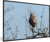 Foto in lijst - Een valk streek op de tak van een boom neer fotolijst zwart 60x40 cm - Poster in lijst (Wanddecoratie woonkamer / slaapkamer)