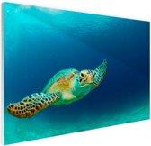 Close-up foto van groene zeeschildpad Glas 60x40 cm - Foto print op Glas (Plexiglas wanddecoratie)