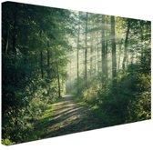 Zonnige oktobermorgen in het bos (Wanddecoratie) - Foto print op Canvas schilderij 30x20 cm