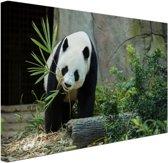 Grote panda Canvas 80x60 cm - Foto print op Canvas schilderij (Wanddecoratie woonkamer / slaapkamer) / Dieren Canvas Schilderijen