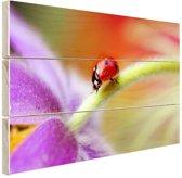 Lieveheersbeestje op een paarse bloem Hout 60x40 cm - Foto print op Hout (Wanddecoratie)