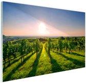 Wijngaard in Duitsland foto Glas 120x80 cm - Foto print op Glas (Plexiglas wanddecoratie)