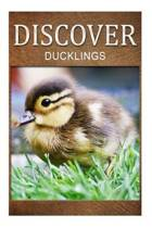 Ducklings - Discover