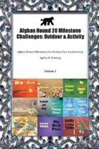 Afghan Hound 20 Milestone Challenges