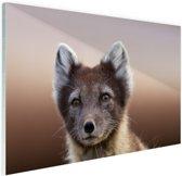 Jonge poolvos Glas 30x20 cm - klein - Foto print op Glas (Plexiglas wanddecoratie)