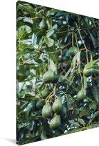 Avocado's aan de boom Canvas 60x90 cm - Foto print op Canvas schilderij (Wanddecoratie woonkamer / slaapkamer)