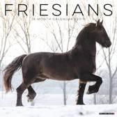 Friesians 2019 Wall Kalender