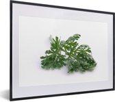 Foto in lijst - Verse absintalsem blad op een witte achtergrond fotolijst zwart met witte passe-partout klein 40x30 cm - Poster in lijst (Wanddecoratie woonkamer / slaapkamer)