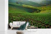 Fotobehang vinyl - Een fantastische kwekerij van groene kool in het hoogland van Thailand breedte 540 cm x hoogte 360 cm - Foto print op behang (in 7 formaten beschikbaar)