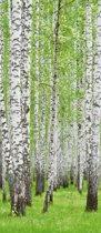 Fotobehang Bos | Groen | 91x211cm