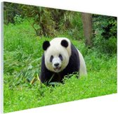 Grote panda in het gras Glas 120x80 cm - Foto print op Glas (Plexiglas wanddecoratie)