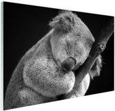 Een slapende koala Glas 30x20 cm - Foto print op Glas (Plexiglas wanddecoratie)