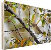 Een tjiftjaf tussen de bladeren Vurenhout met planken 80x60 cm - Foto print op Hout (Wanddecoratie)