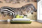 FotoCadeau.nl - Zebras in de natuur Fotobehang 380x265