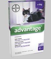 Advantage 80 Kat 4-8 kg 4 pipetten