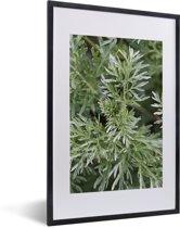 Foto in lijst - Groene kleuren van de alsem plant onder het natuurlijke licht fotolijst zwart met witte passe-partout 40x60 cm - Poster in lijst (Wanddecoratie woonkamer / slaapkamer)