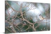 Tweekleurige mees in een besneeuwde tuin Aluminium 30x20 cm - klein - Foto print op Aluminium (metaal wanddecoratie)