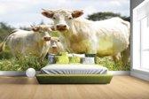 FotoCadeau.nl - Witte koeien in het veld Fotobehang 380x265