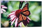 Plexiglas – Zwart / Oranje Vlinder– 120x80 (Wanddecoratie op Plexiglas)