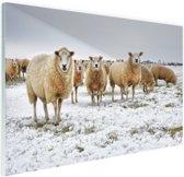 Schapen in een winterlandschap Glas 90x60 cm - Foto print op Glas (Plexiglas wanddecoratie)